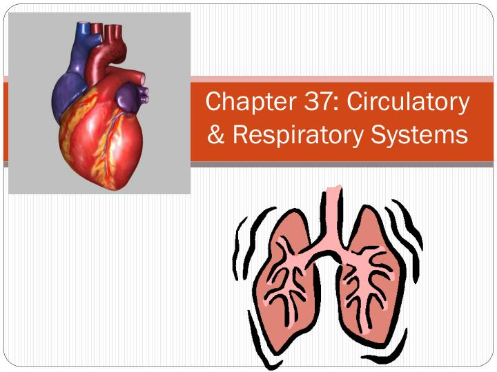 Chapter 37: Circulatory & Respiratory Systems