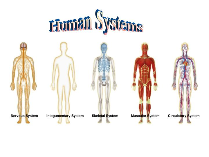 PPT - Nervous System PowerPoint Presentation - ID:3224318