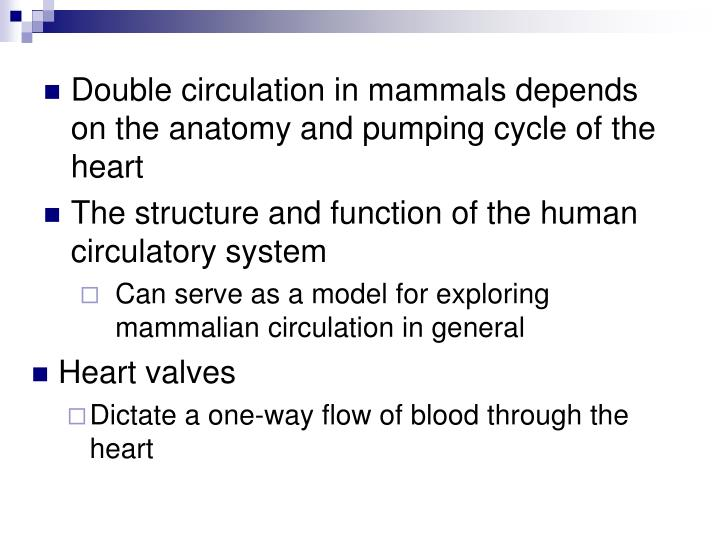 Double circulation in mammals depends on the anatomy and pumping cycle of the heart