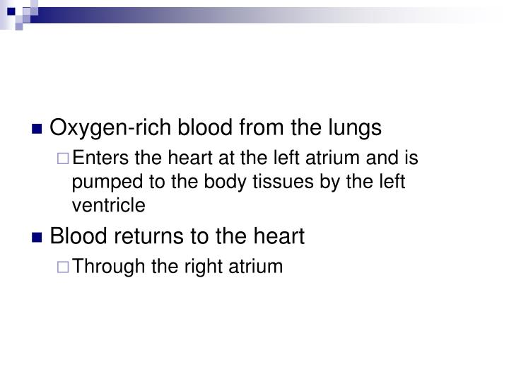 Oxygen-rich blood from the lungs