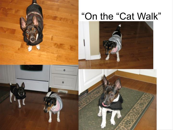 """On the ""Cat Walk"""