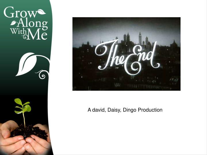 A david, Daisy, Dingo Production
