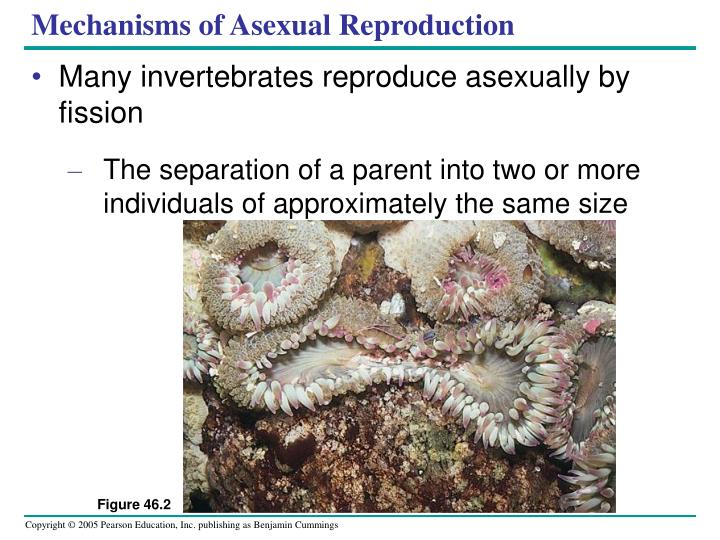 Mechanisms of Asexual Reproduction