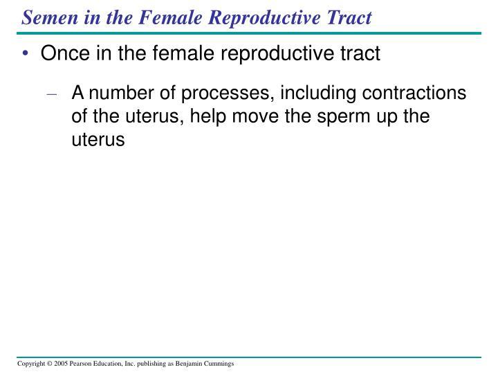 Semen in the Female Reproductive Tract