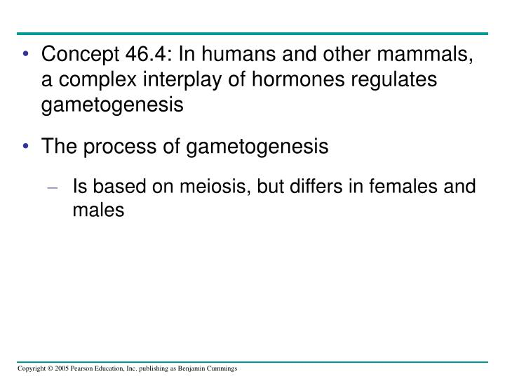 Concept 46.4: In humans and other mammals, a complex interplay of hormones regulates gametogenesis