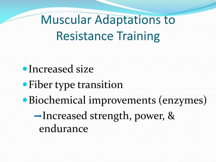 Muscular adaptations to resistance training