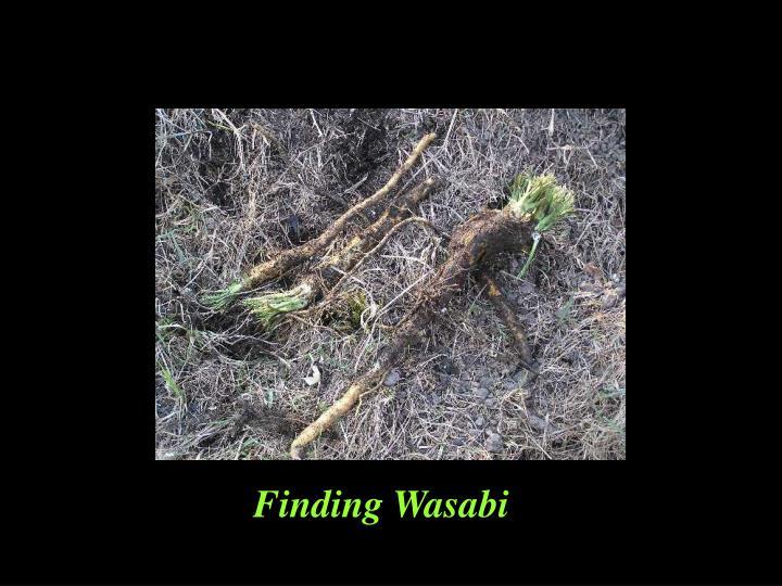 Finding Wasabi