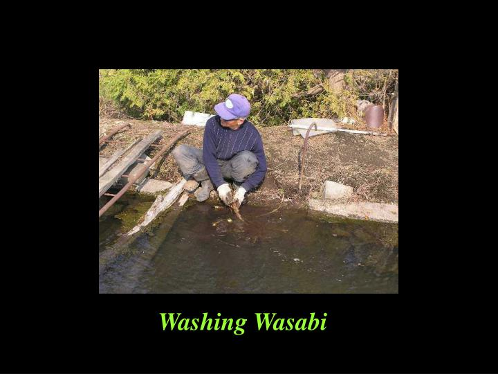 Washing Wasabi