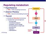 regulating metabolism