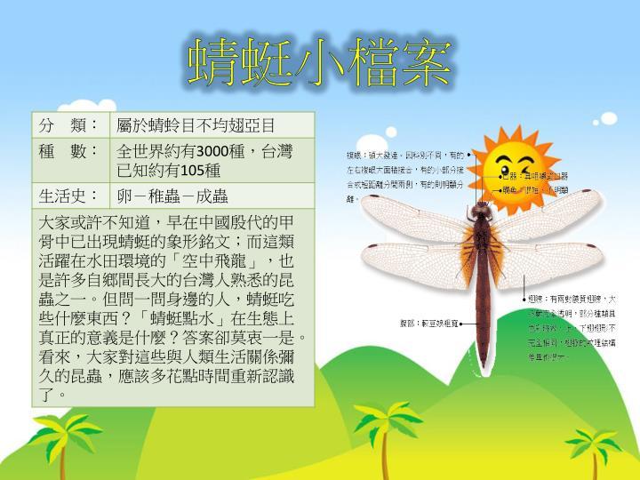 蜻蜓小檔案