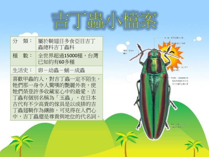 吉丁蟲小檔案