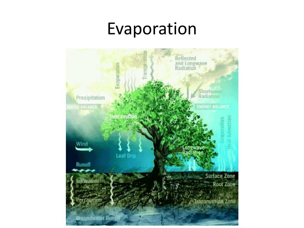 PPT - Evaporation PowerPoint Presentation - ID:3231620