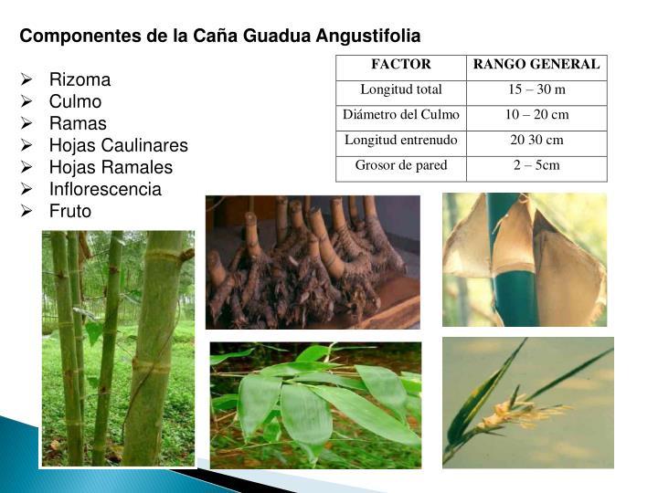 Componentes de la Caña Guadua Angustifolia
