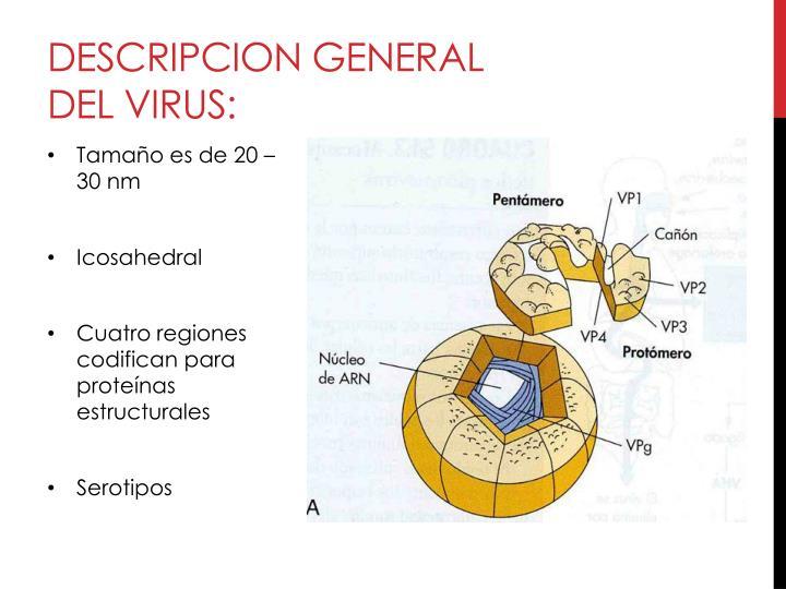 Descripcion general del virus