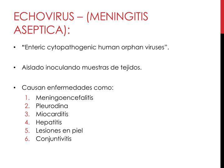 Echovirus – (meningitis