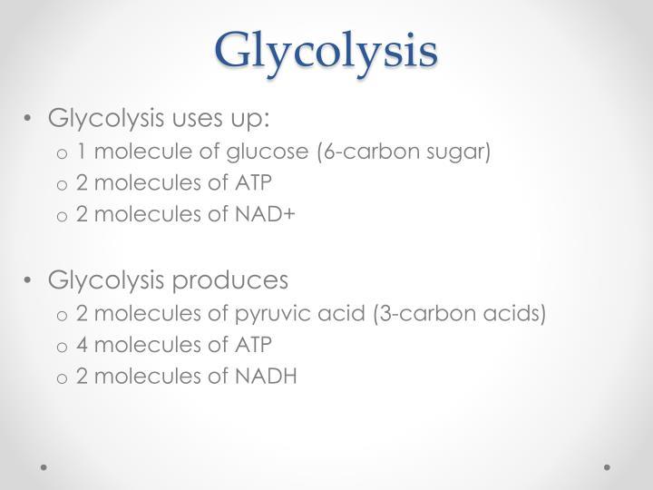 Glycolysis