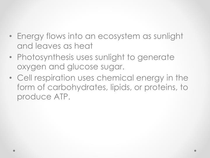 Energy flows into an ecosystem as sunlight and leaves as heat