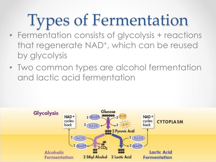 Types of Fermentation