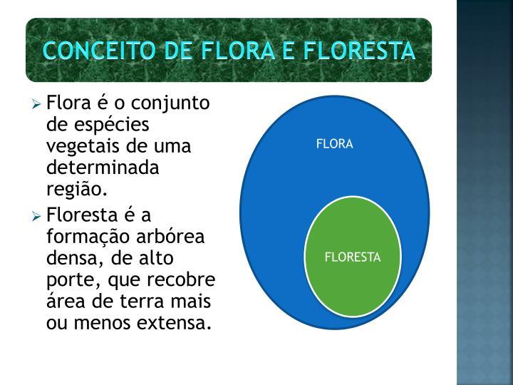 Conceito de flora e floresta