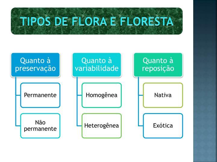 TIPOS DE FLORA E FLORESTA