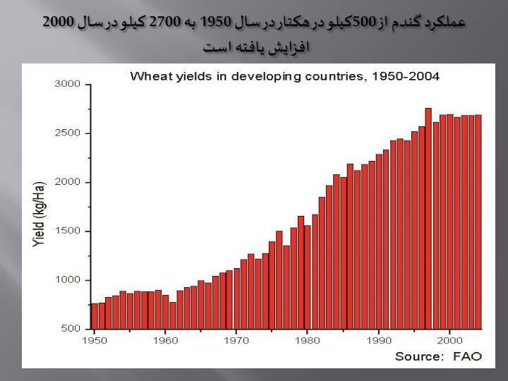 عملکرد گندم از 500کیلو در هکتار در سال 1950 به 2700 کیلو در سال 2000 افزایش یافته است