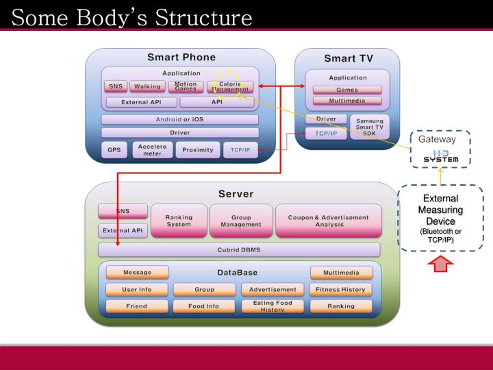 Some Body's Structure
