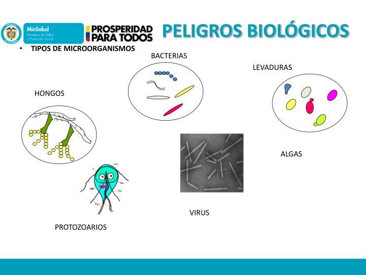 PELIGROS BIOLÓGICOS