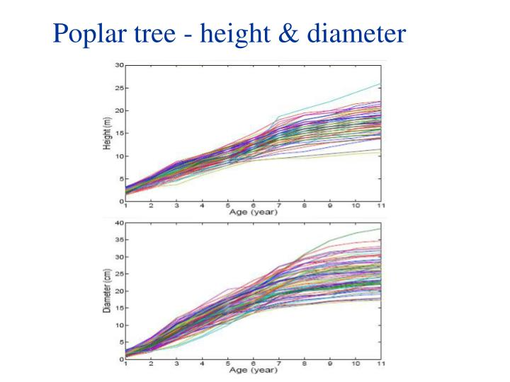 Poplar tree - height & diameter