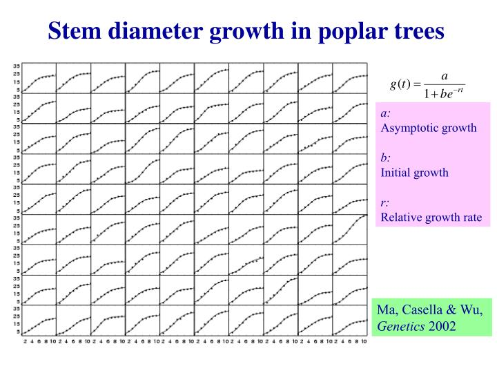 Stem diameter growth in poplar trees