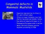 congenital defects in mammals mustelids
