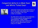congenital defects in mule deer and white tailed deer