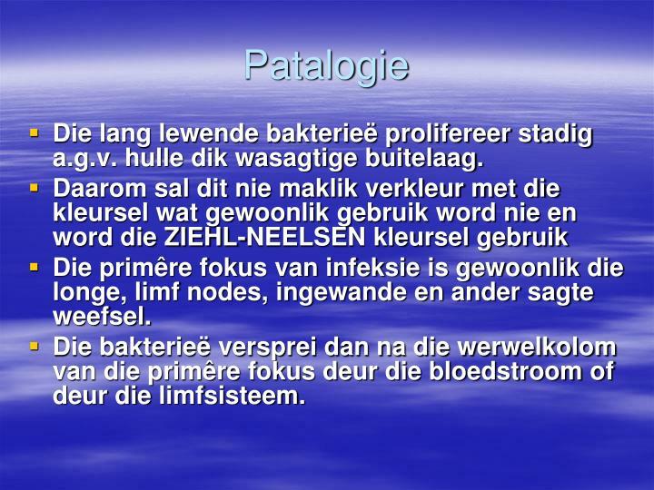 Patalogie