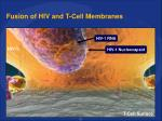 fusion of hiv and t cell membranes