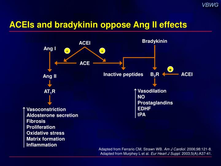 ACEIs and bradykinin oppose Ang II effects