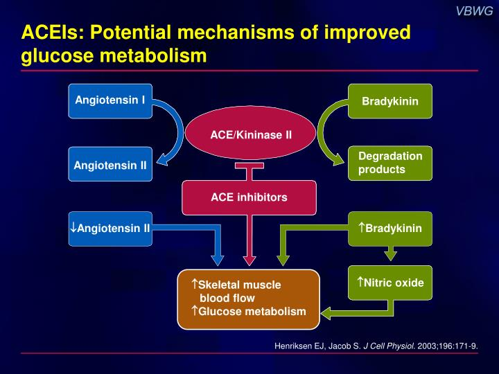 ACEIs: Potential mechanisms of improved glucose metabolism