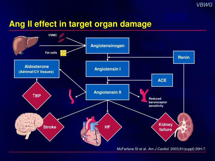 Ang II effect in target organ damage