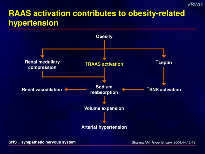 RAAS activation contributes to obesity-related hypertension
