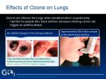 effects of ozone on lungs