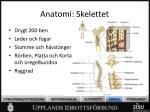 anatomi skelettet