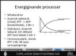 energigivande processer