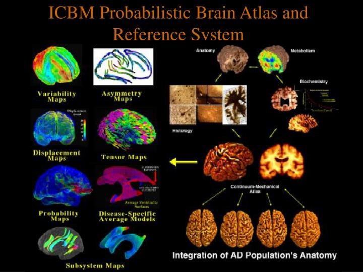 ICBM Probabilistic Brain Atlas and Reference System