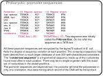 prokaryotic promoter sequences