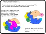 rna polymerases1