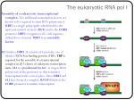 the eukaryotic rna pol i1