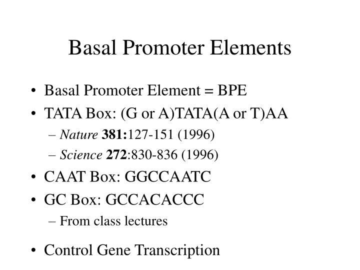basal promoter elements n.