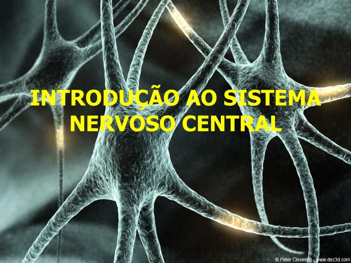introdu o ao sistema nervoso central n.