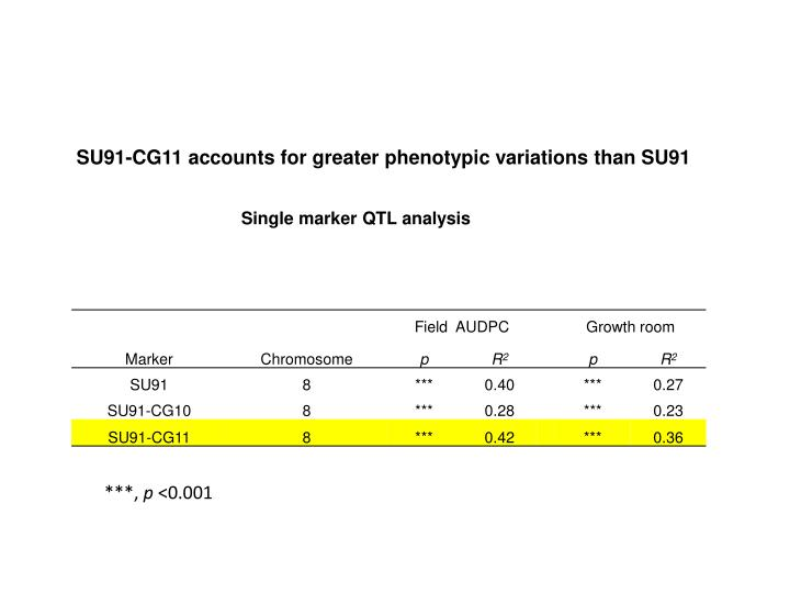 SU91-CG11 accounts for greater phenotypic variations than SU91