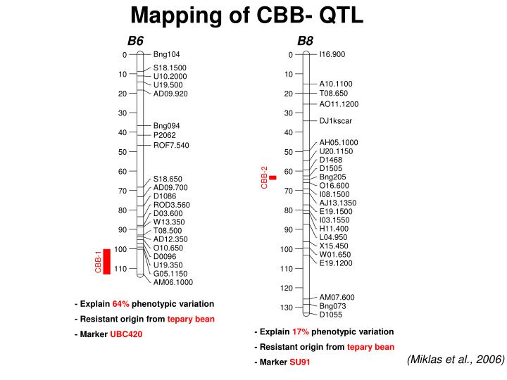 Mapping of CBB