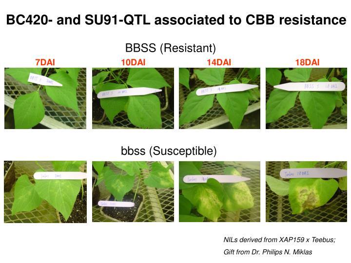 BBSS (Resistant)