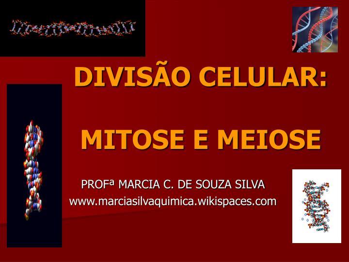 Ppt Divisao Celular Mitose E Meiose Powerpoint Presentation
